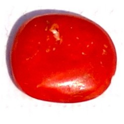 2.5 Carat 100% Natural Coral Gemstone Ocean Sea Product No 018