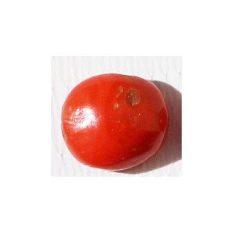3.5 Carat 100% Natural Coral Gemstone Ocean Sea  Ref: Product No 004